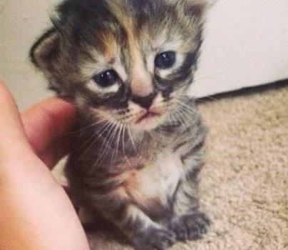 Esse é provavelmente o gato mais triste que você já viu