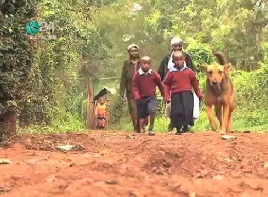Cachorra adota crianças que foram abandonadas pela mãe