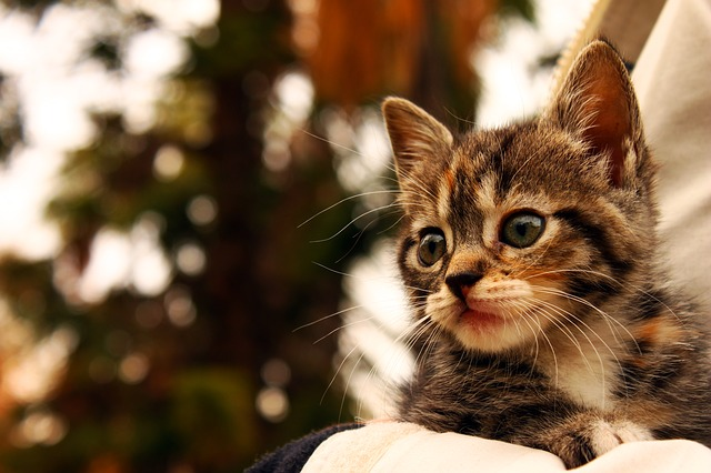Veja por que é importante castrar o gato