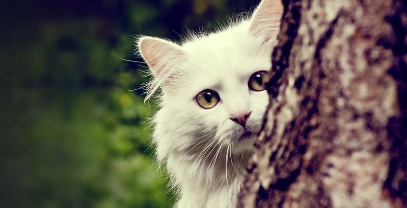 7 coisas sobre gatos que você não sabia