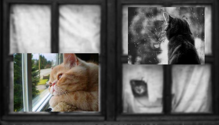Gatos também ficam tristes na ausência dos donos