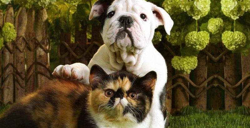 5 coisas que devem ficar longe do seu animal de estimação