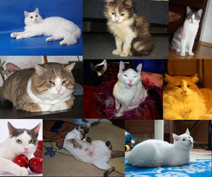 Gatos resgatados, veja o antes e o depois