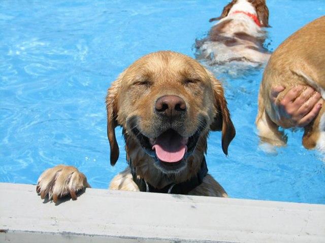 Cães se divertindo na piscina que vão deixar seu dia melhor