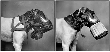 Saiba o Que Fazer em Caso de Intoxicação Química em Cães e Gatos