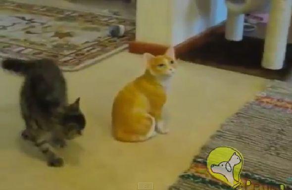Olha só que fofo esse gatinho atacando um gato de cerâmica