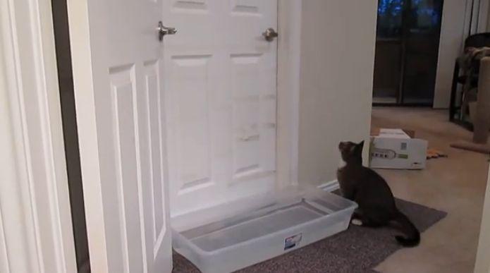 Você não vai acreditar na habilidade desse gato