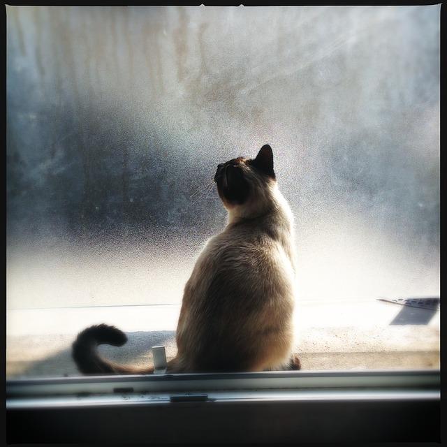 Motivos para não deixar seu gato sair na rua