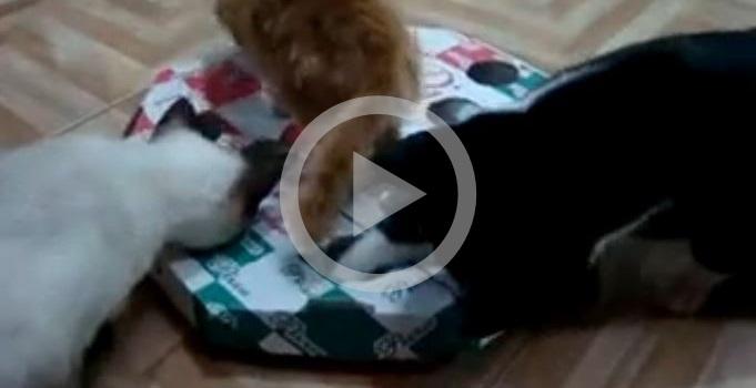 Brinquedo de gato simples e divertido