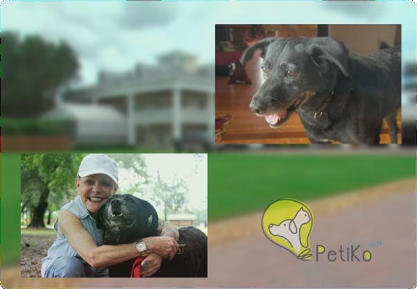 Após caminhar 48 km até encontrar seus donos e ser rejeitada, cadelinha tem um lindo final feliz
