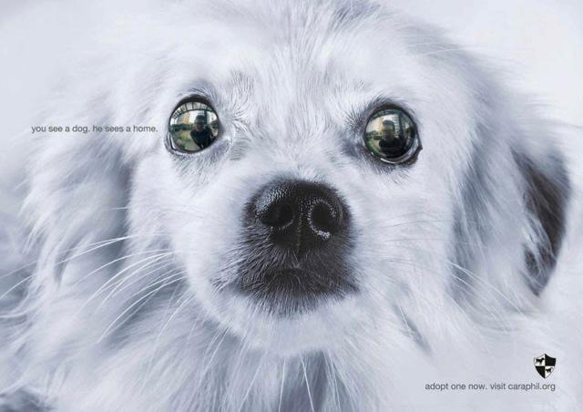 Você vê um cachorro. Ele vê um lar