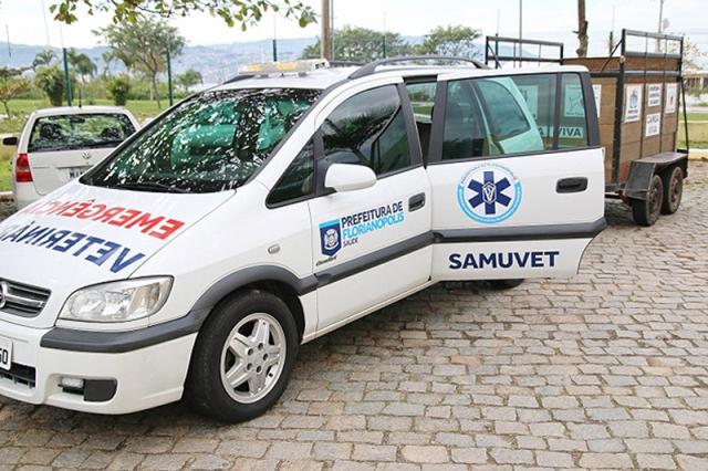 Cidade brasileira cria SAMU para atender animais acidentados