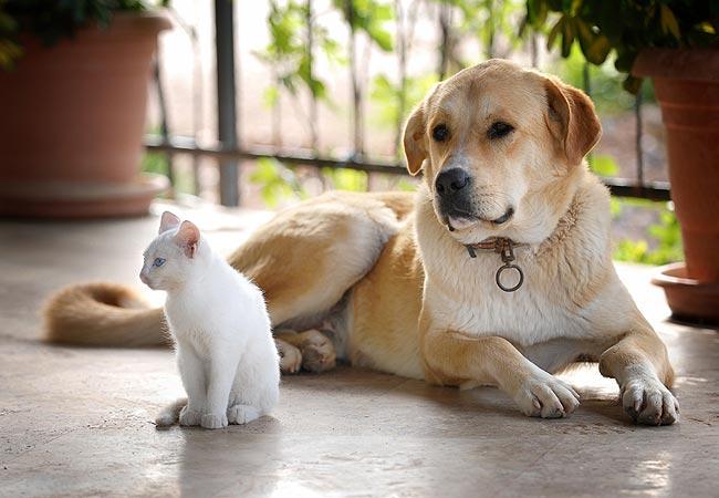 Está preparado para adotar um animal de estimação?