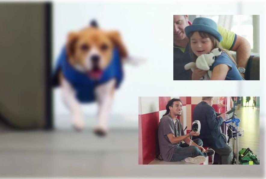 Incrível: Cachorro trabalha encontrando donos de objetos perdidos em aeroporto