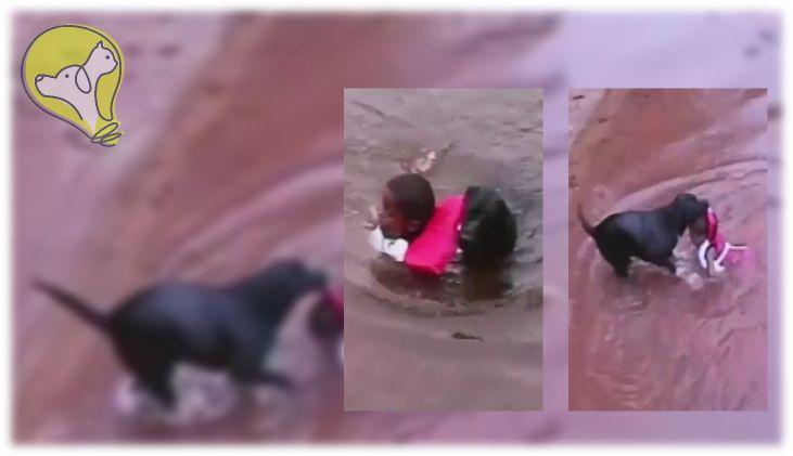 Cachorro pula na água para salvar garotinho
