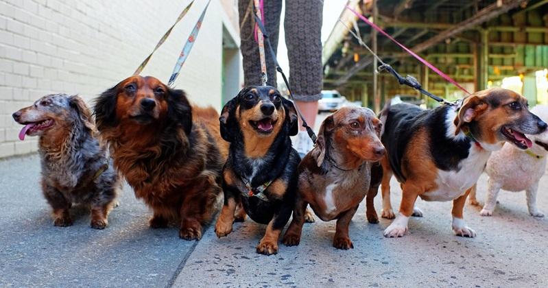 7 Tipos de coleiras para cachorro