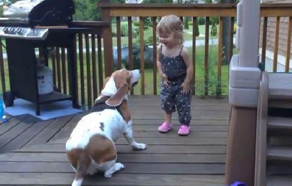 Cãozinho brincando com bebê faz sucesso