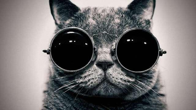 Você realmente conhece sobre gatos? Faça o teste e descubra