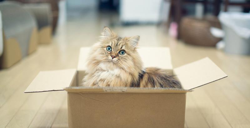 10 dicas da Dra. Laila para melhorar o comportamento dos gatos