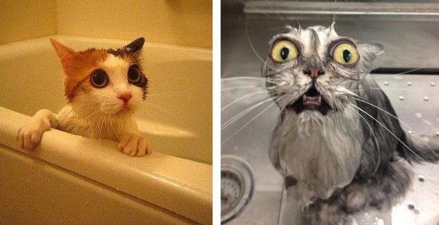 Fotos de gatos: Na internet X Vida real