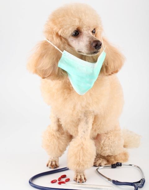 Medicamentos para animais de estimação – Nunca automedique seu pet