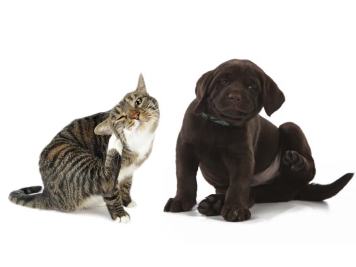 Tudo o que você precisa saber para acabar com as pulgas do seu pet