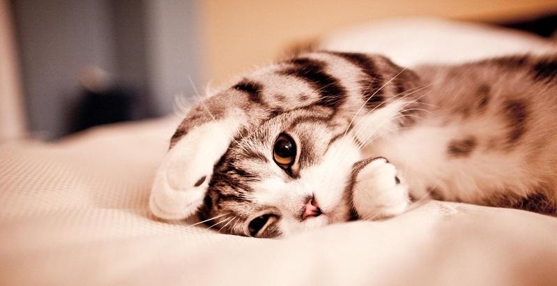 Bem-estar do gato: você dá a devida atenção à qualidade de vida do seu bichano?