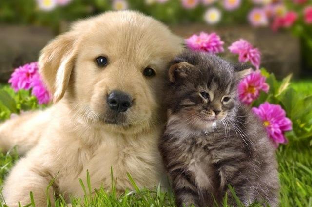 Gato ou cachorro? O que mais combina com você? Faça o teste e descubra