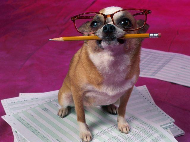 Sabe tudo sobre cachorro? Faça o teste e descubra!