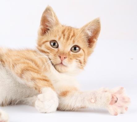 Doença renal crônica em gatos (DRC)