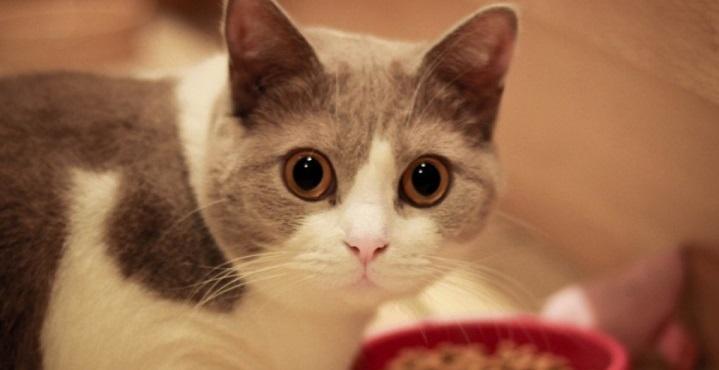 5 erros que não podem ser cometidos ao armazenar a ração do gato