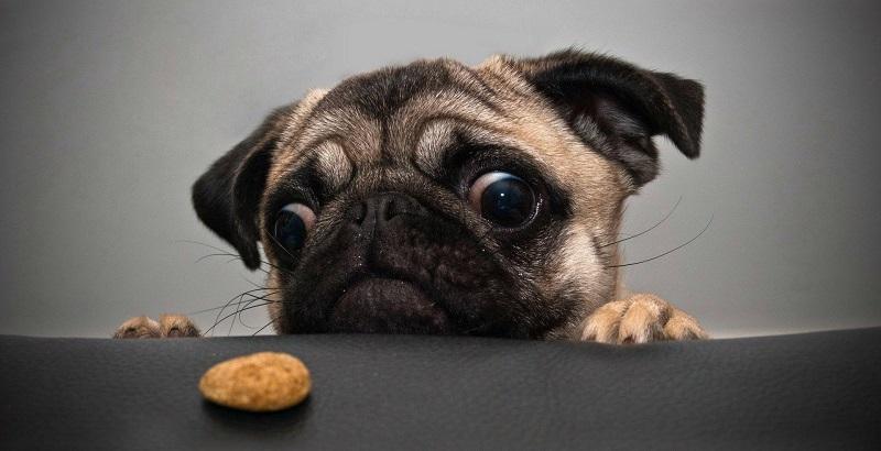 8 Alimentos que Causam Gases em Cães
