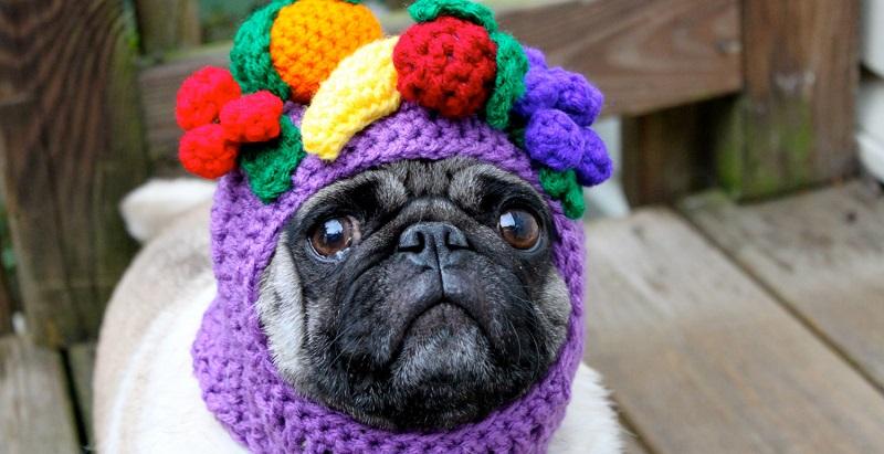 8 vegetais e frutas tóxicas para cães