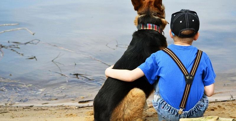 9 razões que nos fazem amar nossos cães como se fossem da família