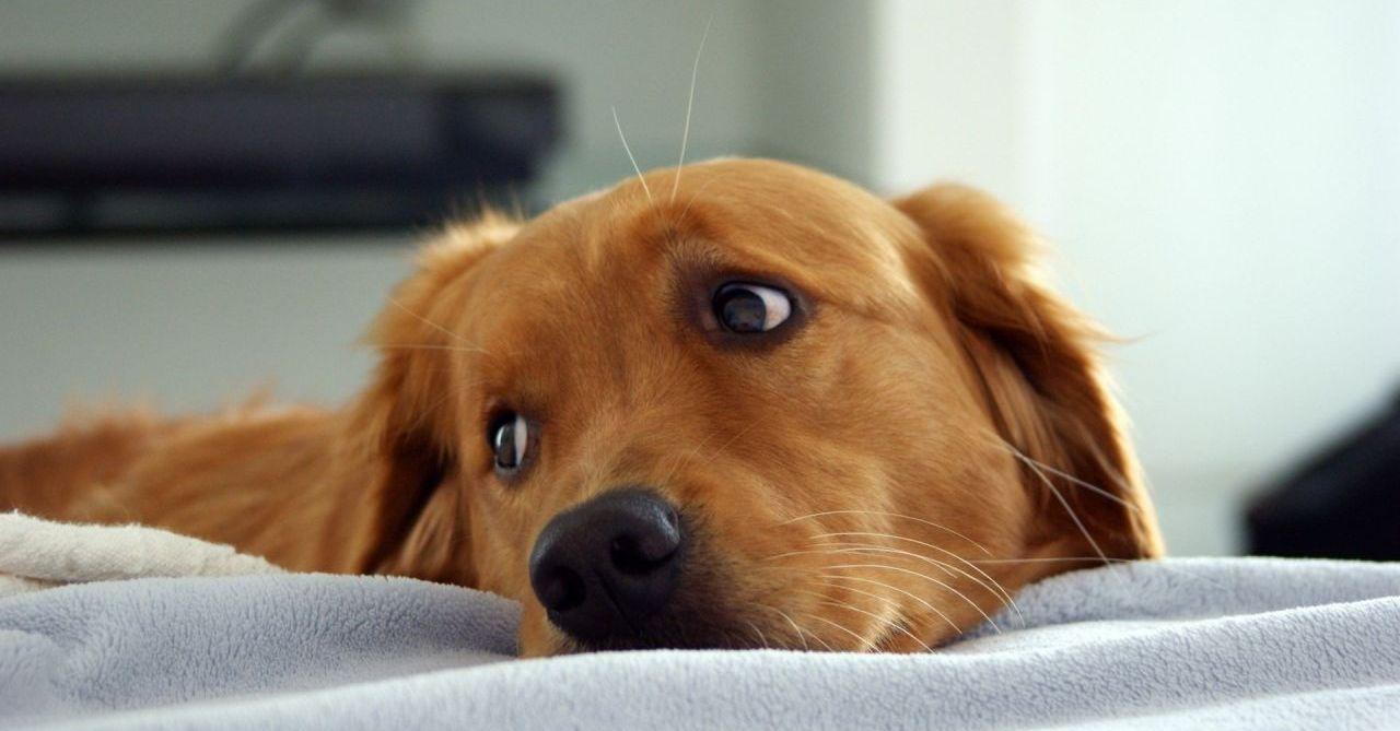 5 erros terríveis que podem tornar seu cão infeliz