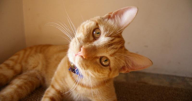 Você cuida bem do seu gato? Faça o teste e descubra!