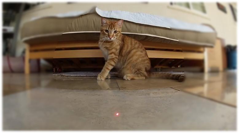 Brincadeira do Gato Perseguindo Laser: Não Faça Isso com seu Bichano!