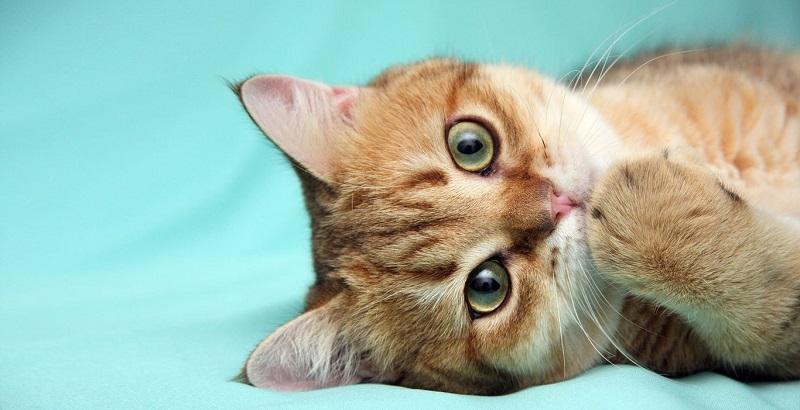 Os 270 melhores nomes para gatos