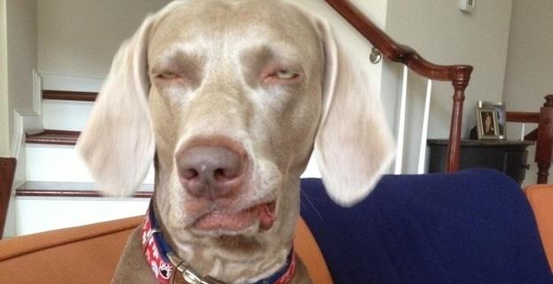 12 Reações que você tem durante o dia representadas por cães