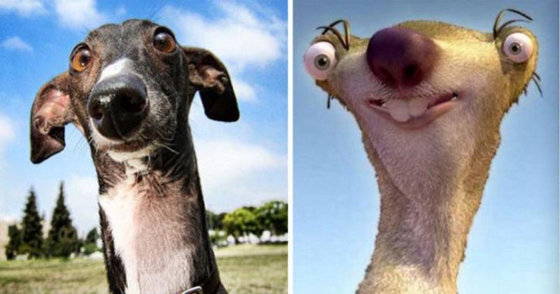 12 cães parecidos com pessoas famosas
