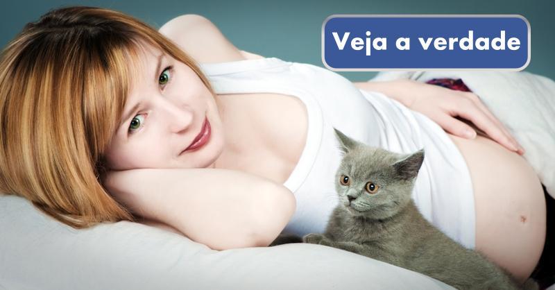 A verdade sobre toxoplasmose, gatos e gravidez (IMPORTANTE)