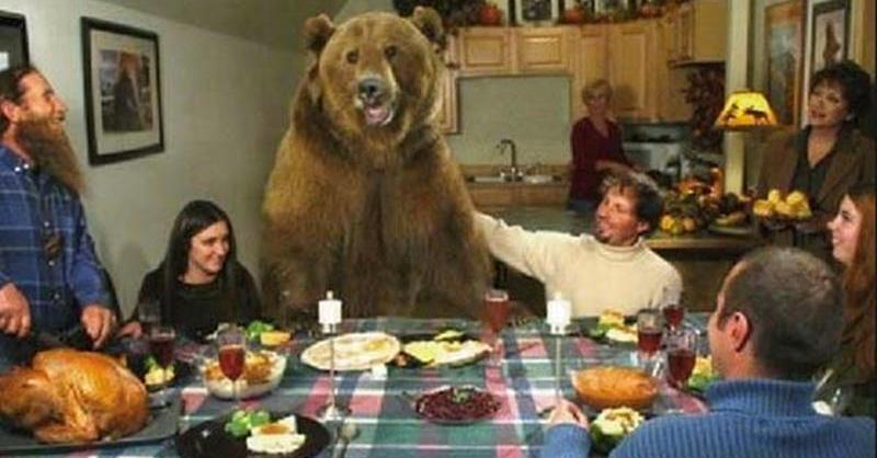 Urso vivia como membro de uma família