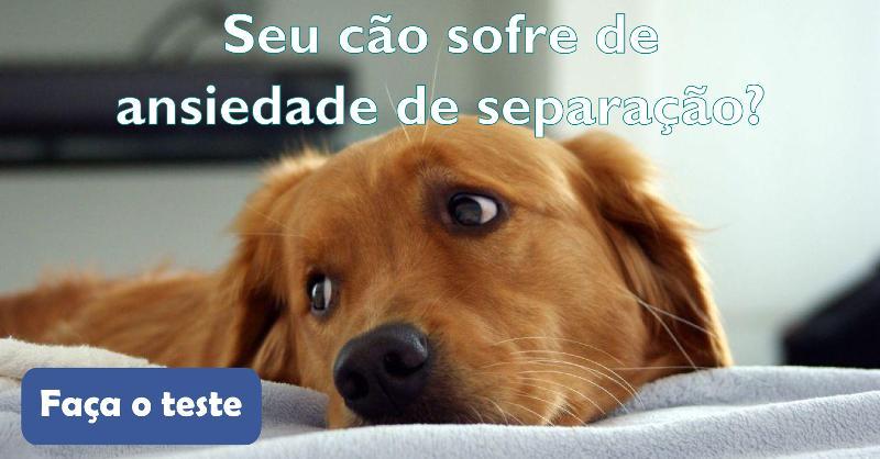Seu cão sofre de ansiedade de separação? Faça o teste!