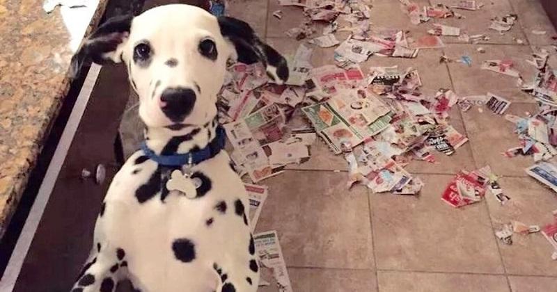 Punir o cachorro: Será que ele sabe que fez coisa errada?