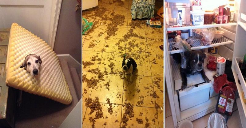 15 cachorros que não imaginaram que você chegaria tão cedo em casa