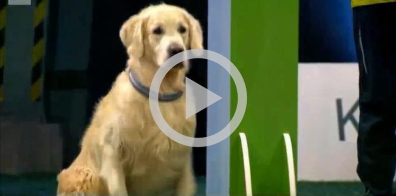 Cachorro apronta em concurso de obediência e fica famoso