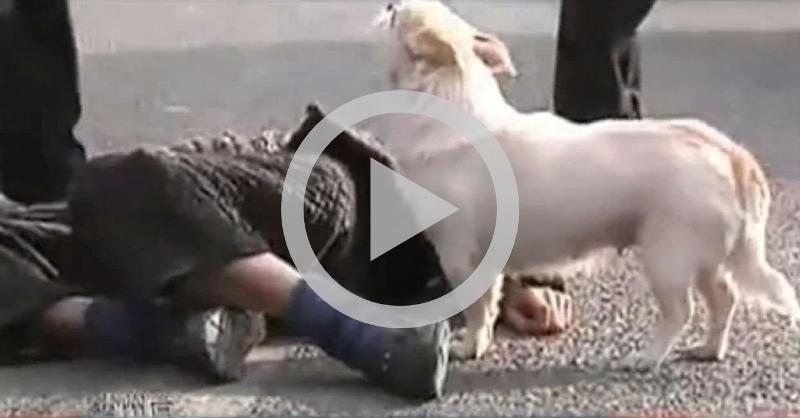 Homem passa mal e é protegido por seu cachorro fiel