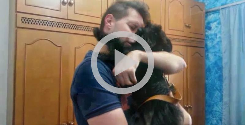 Emocionante: Cachorro reencontra seu dono depois de 15 dias
