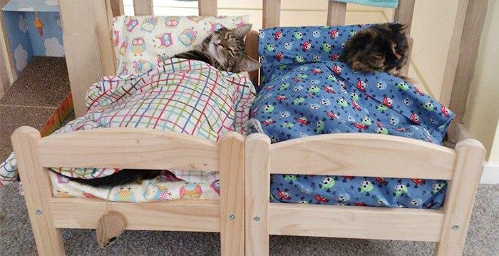 Nova moda: transformar cama de boneca em cama para gato