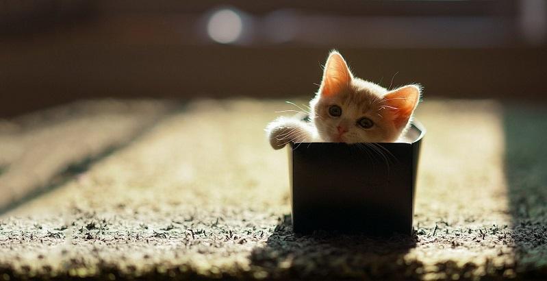 As 16 melhores frases sobre gato
